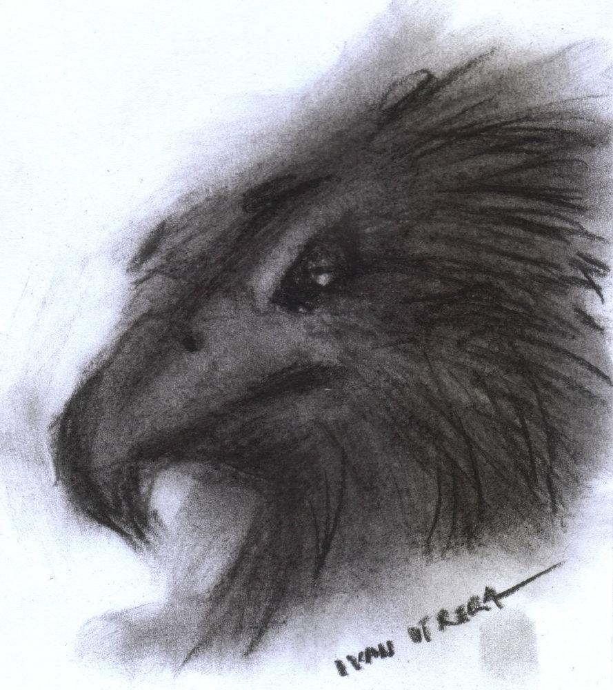 eagle_389275.jpg