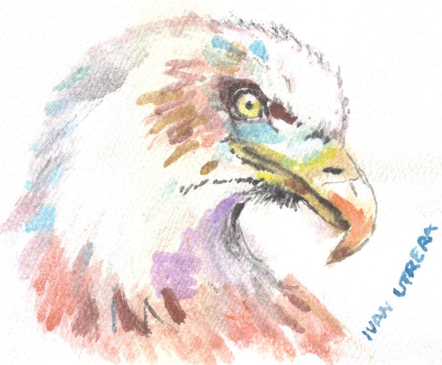 eagle01_389314.jpg