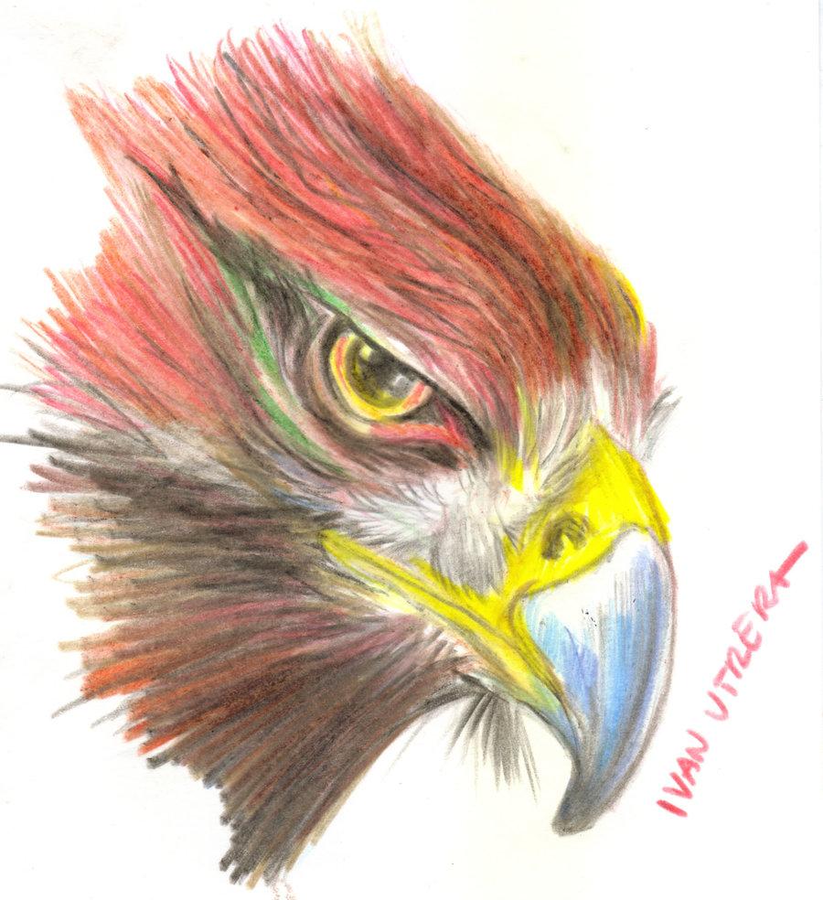eagle02_390005.jpg