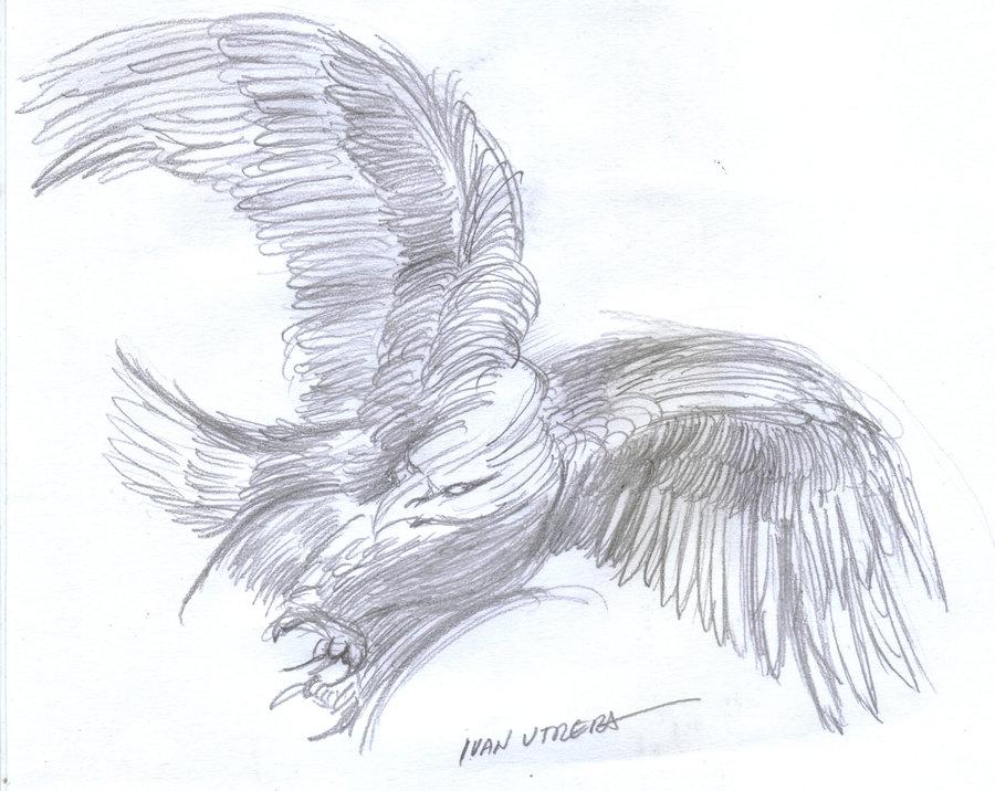 eagle03_390510.jpg