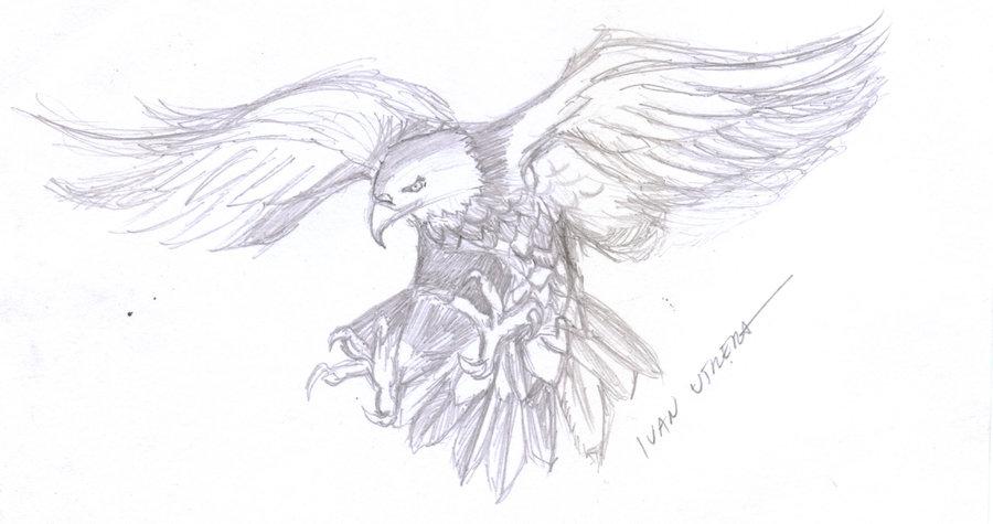 eagle07_391282.jpg