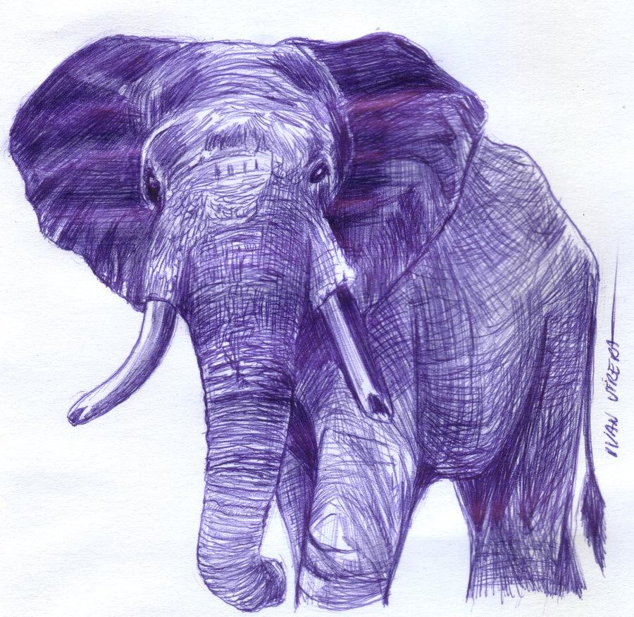 elephant01_391566.jpg