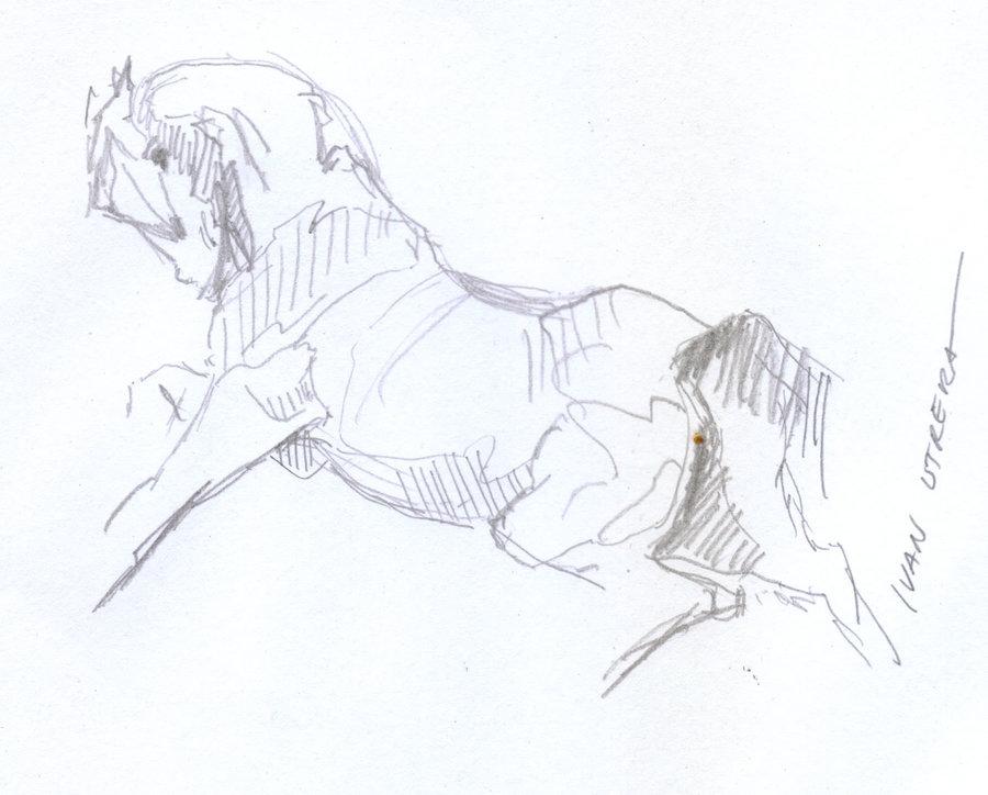horse11_391564.jpg