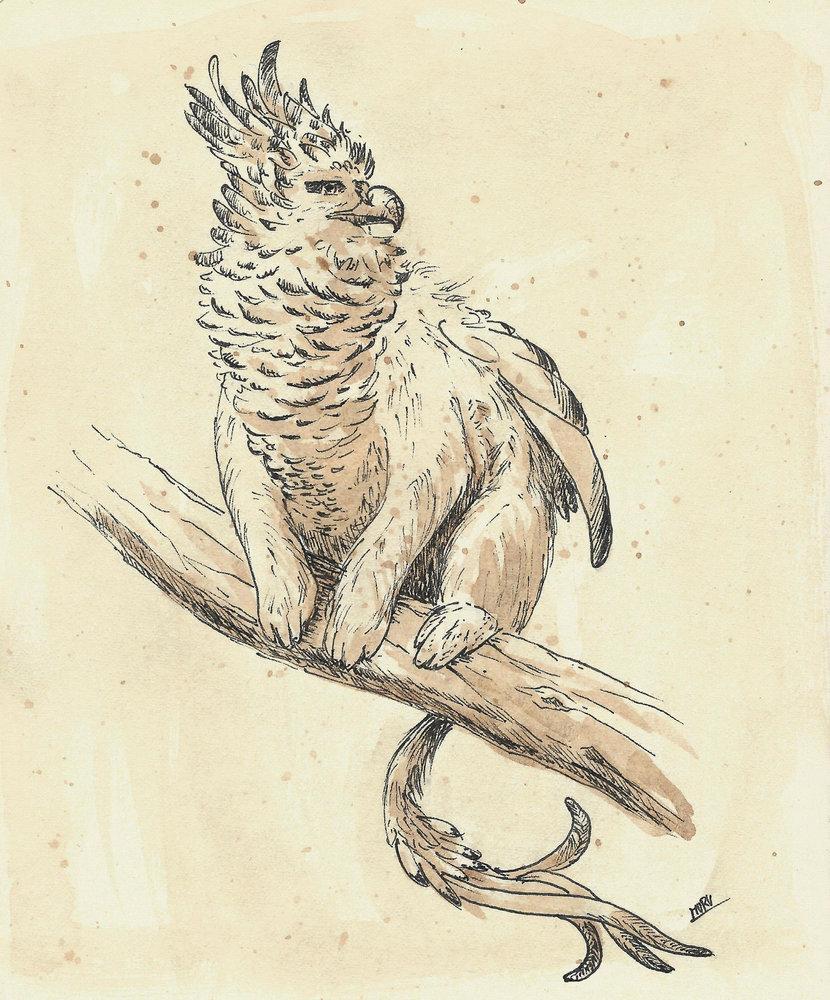 Monkeybird_hibrid_431637.jpg