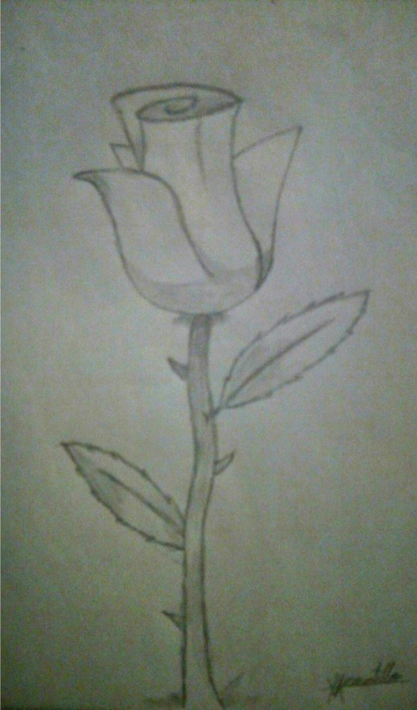 rose_gigantea_419043.jpg