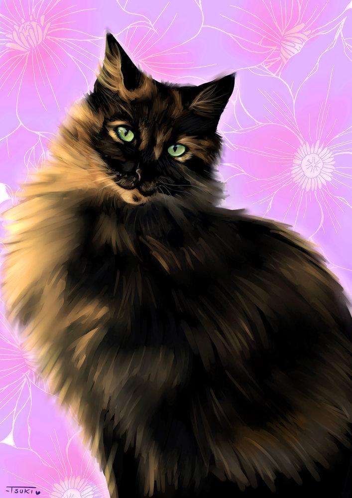 cat_commision_420445.jpg