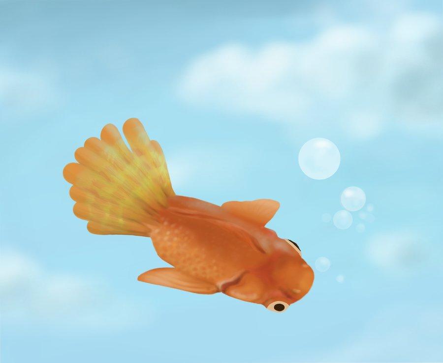 goldfish_422076.jpg