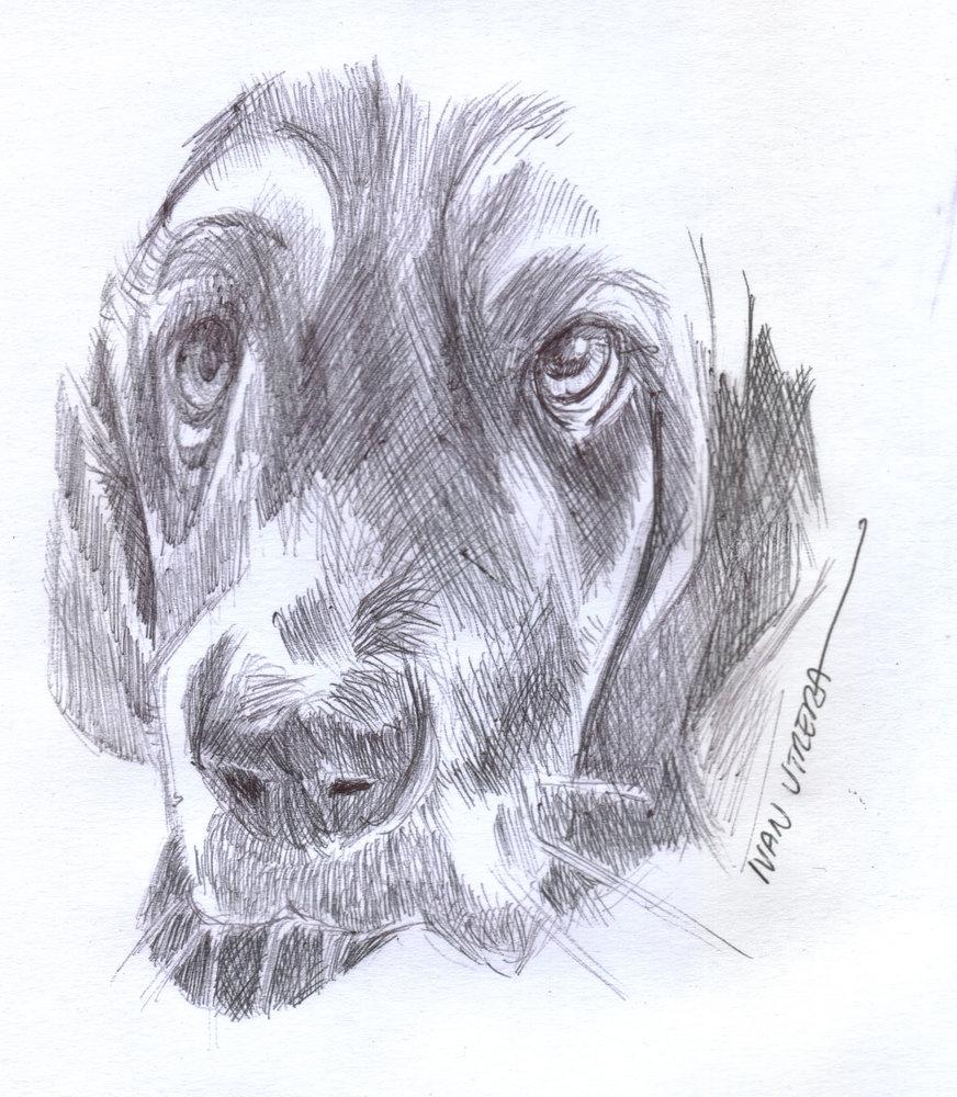 dog03_417648.jpg