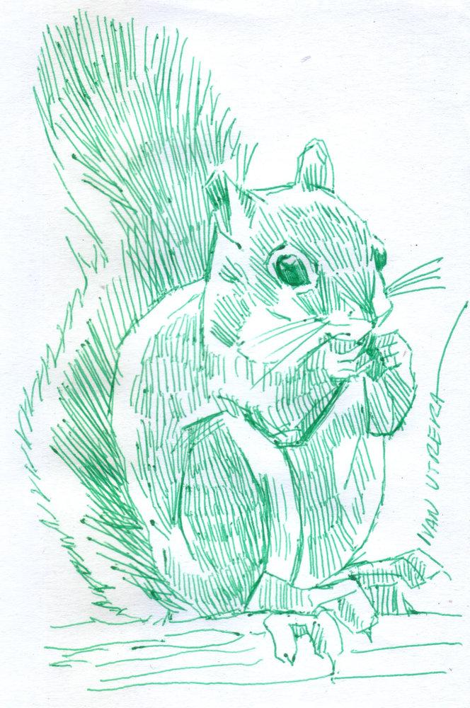 squirrel01_417649.jpg