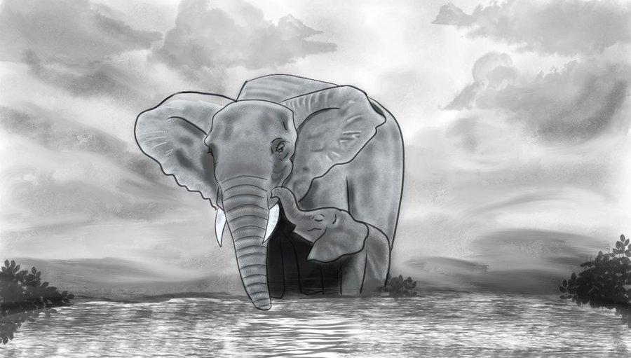 elefantes1_427152.jpg