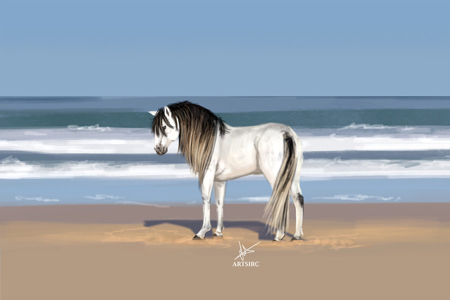 horse_1000px_464836.jpg