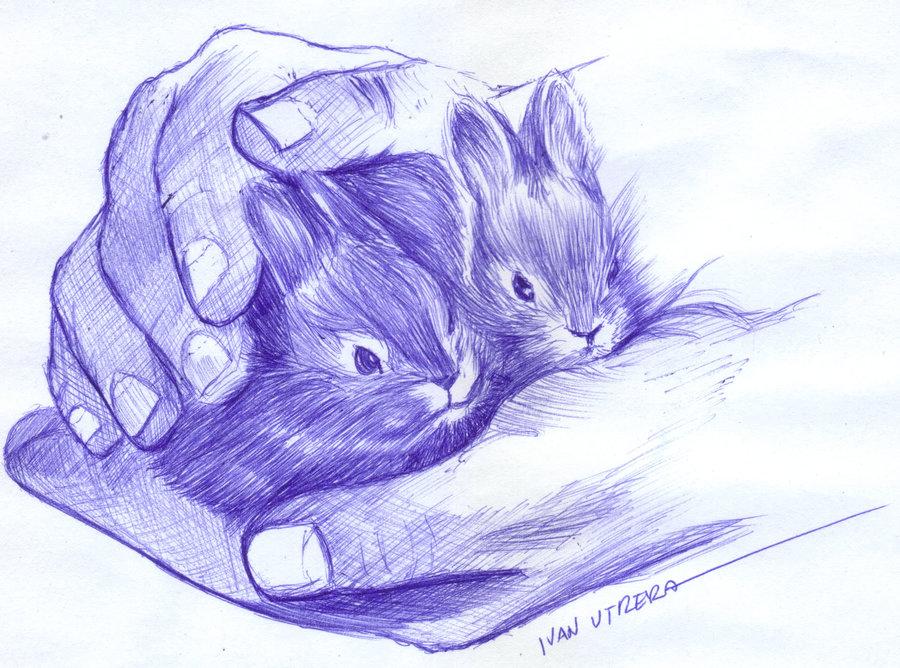 rabbit_464873.jpg