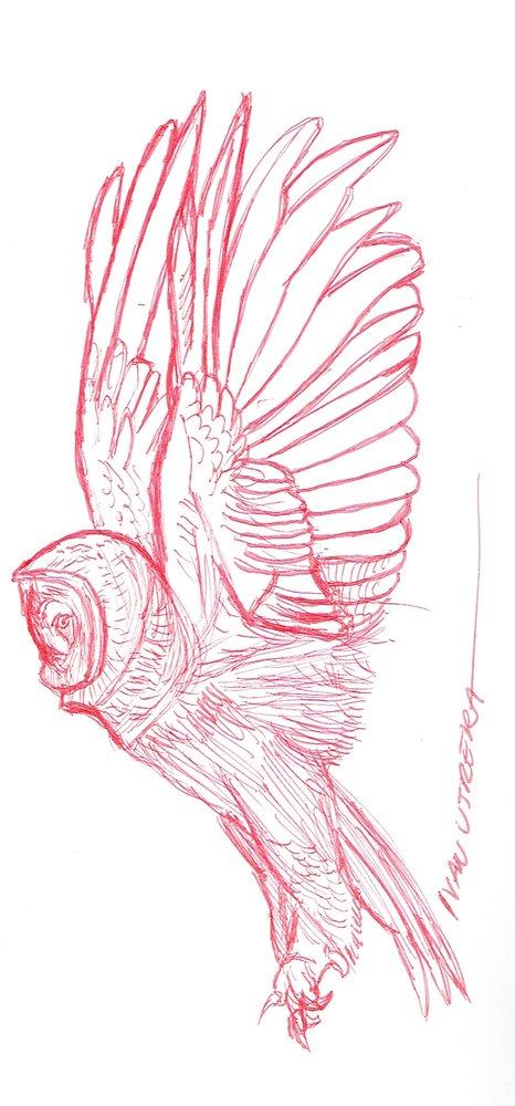 owl05_471943.jpg
