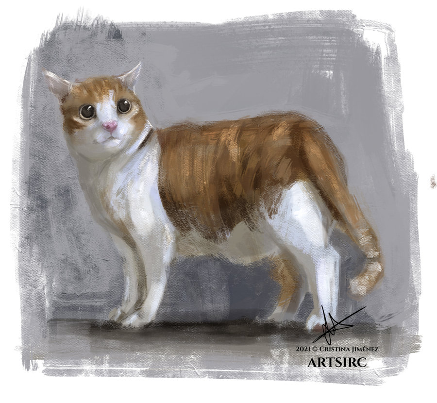 cat_study_456430.jpg