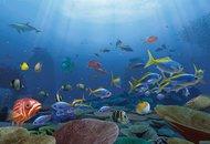 under_the_sea_210362.jpg