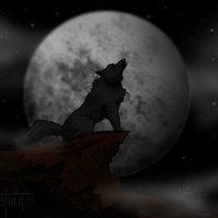 Lobo en la noche nublada