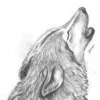 lobo ahuyando