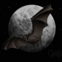murciélago en la noche