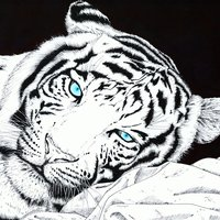 Tigre Albino en Reposo