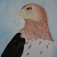 Águila en acuarela