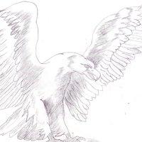 Águila enfadada