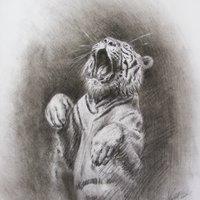 Tigre saltando.