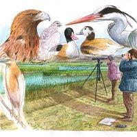 Ornitólogos para libro escolar Anaya