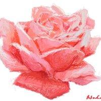 Rosa roja.