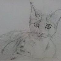 Gato :3