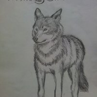 Lobo para Kaigen