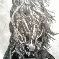 Cabeza de caballo frisón