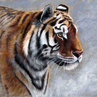 Tigre en la niebla