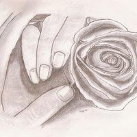 Manos con una rosa