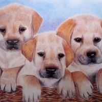 Tres perritos