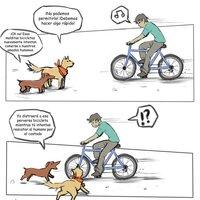 Perros y bicicletas