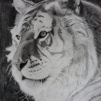 Golden Tiger portrait