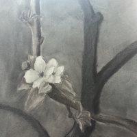 Flor de un manzano
