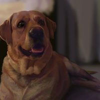 Illustration Bronx, the Dog / Ilustracion Bronx, el Perro