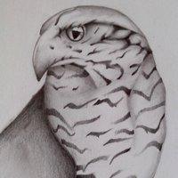 halcón peregrino