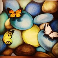 Mariposas posando en piedras