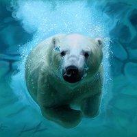 Práctica - Oso polar