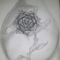rosa atraves de gota de agua
