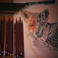 vulpes vulpes - Fox Red