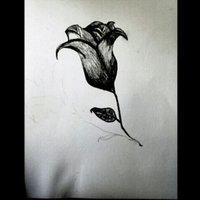 Rosa, rosa, rosas...