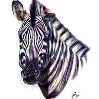 Cebra Equus