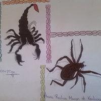 Scorpion y Araña reclusa marron