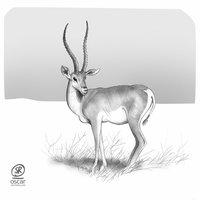 Ilustración de gacela