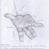 Anatomía Manos 2