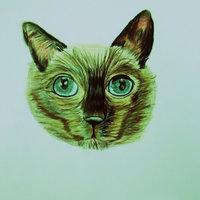 pelaje gato