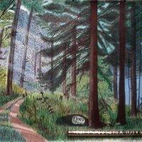 Un camino en el bosque